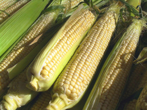 Minnesota sweet corn